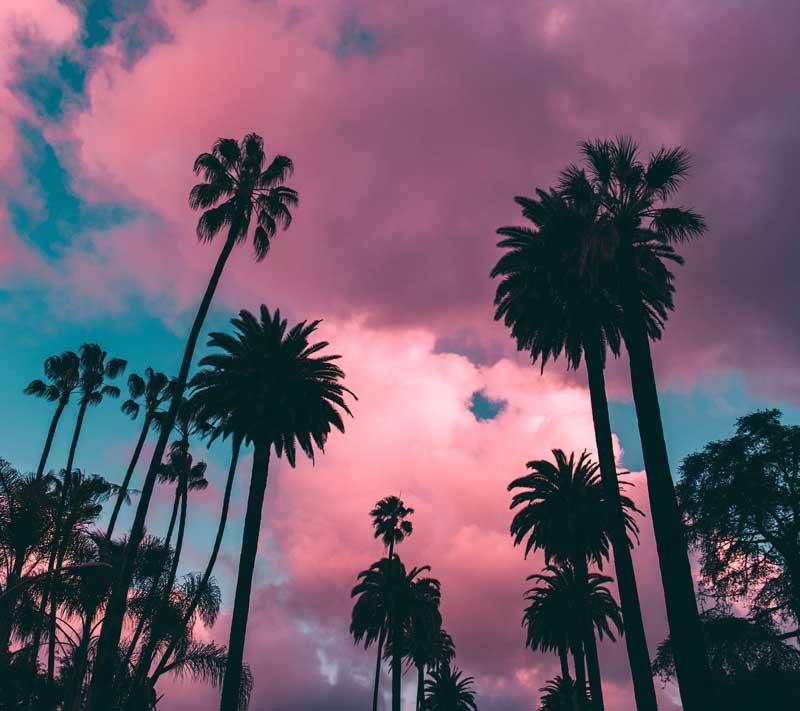 Tropical-Summer